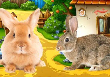 Dạy bé học tiếng Anh qua hình ảnh các con vật