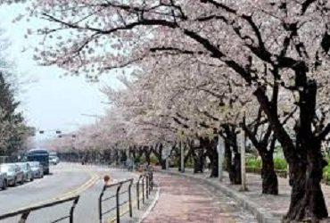 6 trang web học tiếng Hàn online hiệu quả nhất năm 2020